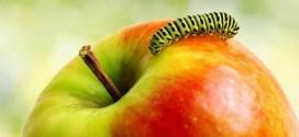 """Canan Karatay: """"Kurtlu elma yiyin""""CANAN KARATAY: """"KURTLU ELMA YİYİN"""""""